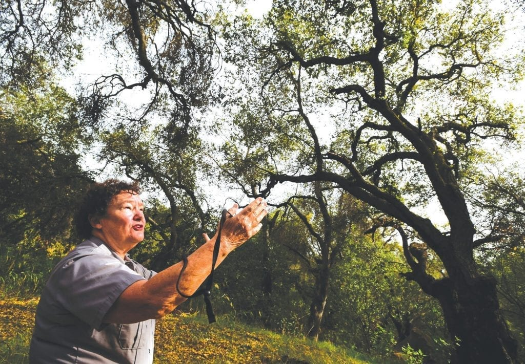 The drought's untold toll on oaks | Thousand Oaks Acorn